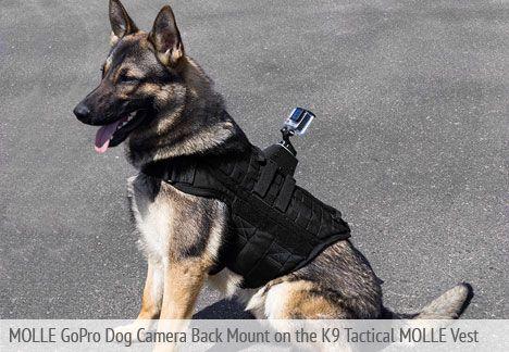 K9 Molle Best Gopro Dog Camera Back Mount Gopro Dogs Gopro Camera