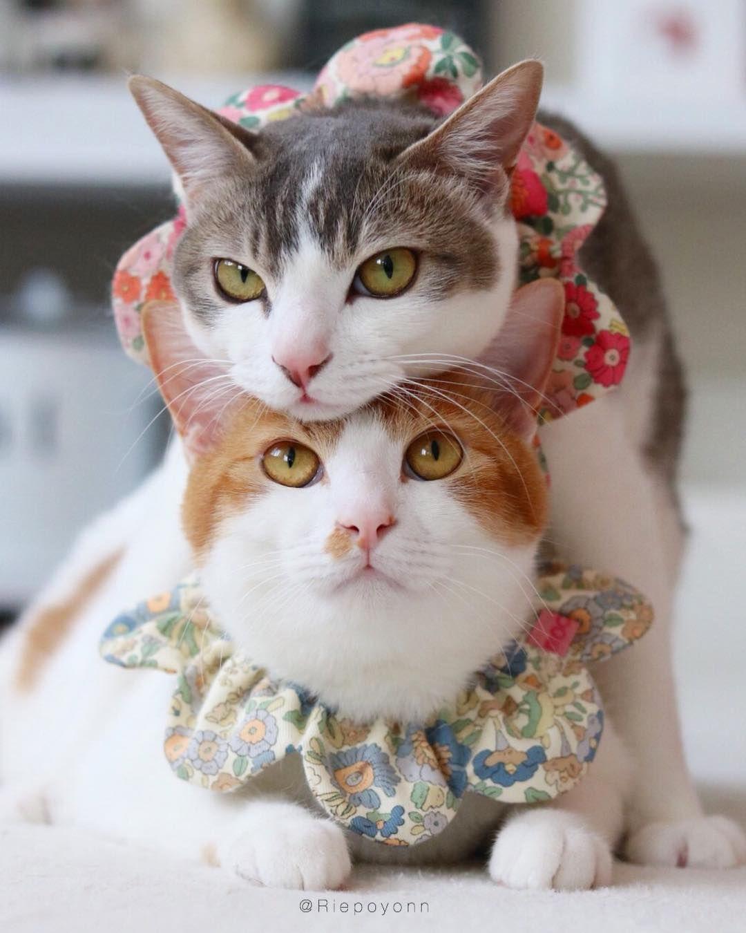 Tsum Tsum Happy Weekend My Friends 気づいたら重なってる 仲良しツインズ それにしても2人ともまんまる そらもまんまる 愛しのまんまる3兄妹です 今日は天国のみかんの誕生日です ブログに書きましたのでよかったら 可愛い猫 子猫