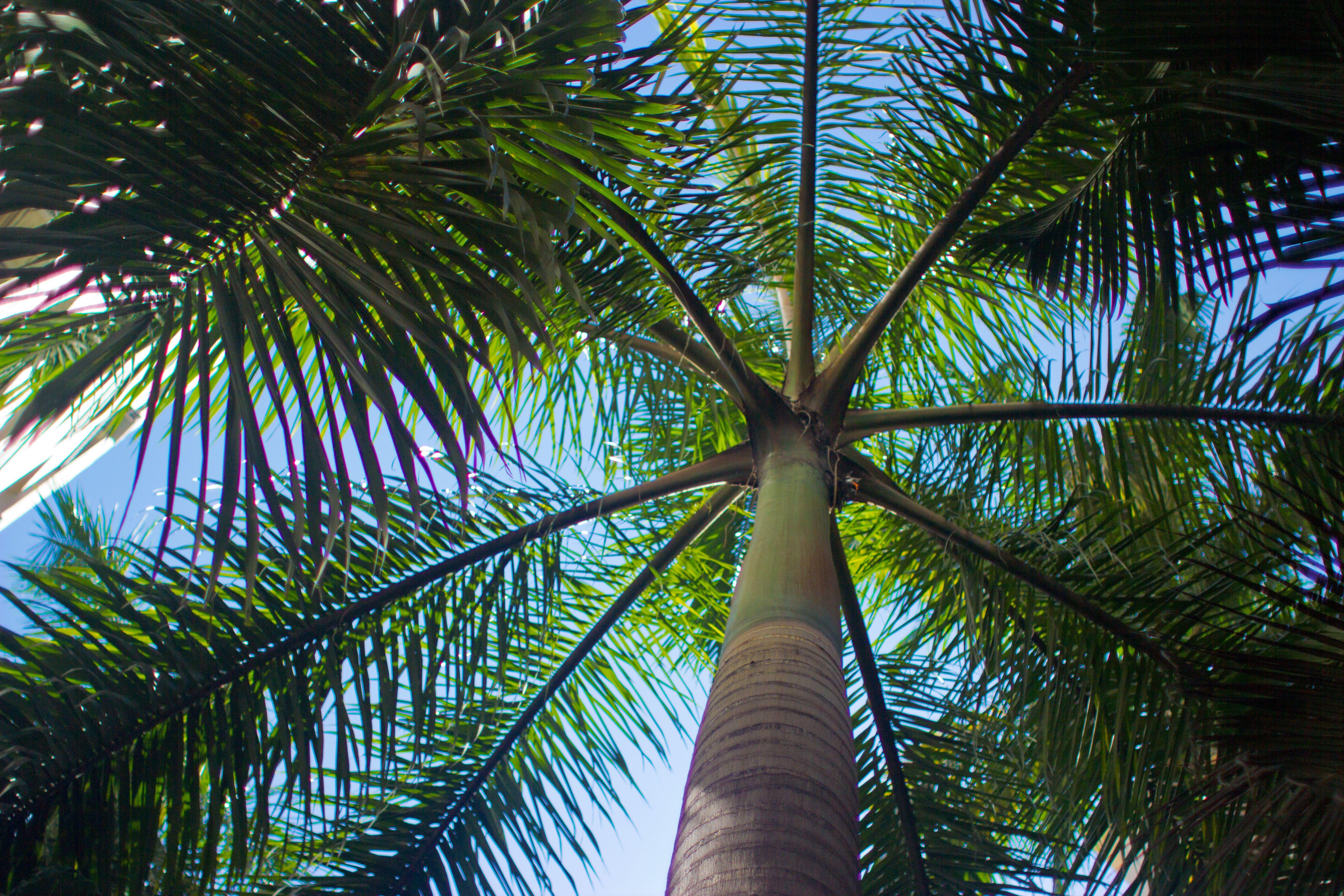 Bajo palmera