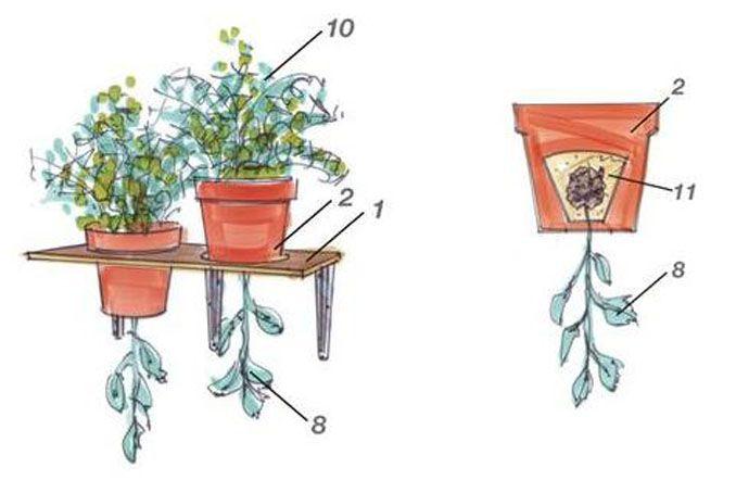 Photo of Anleitung: Tomaten pflanzen leicht gemacht