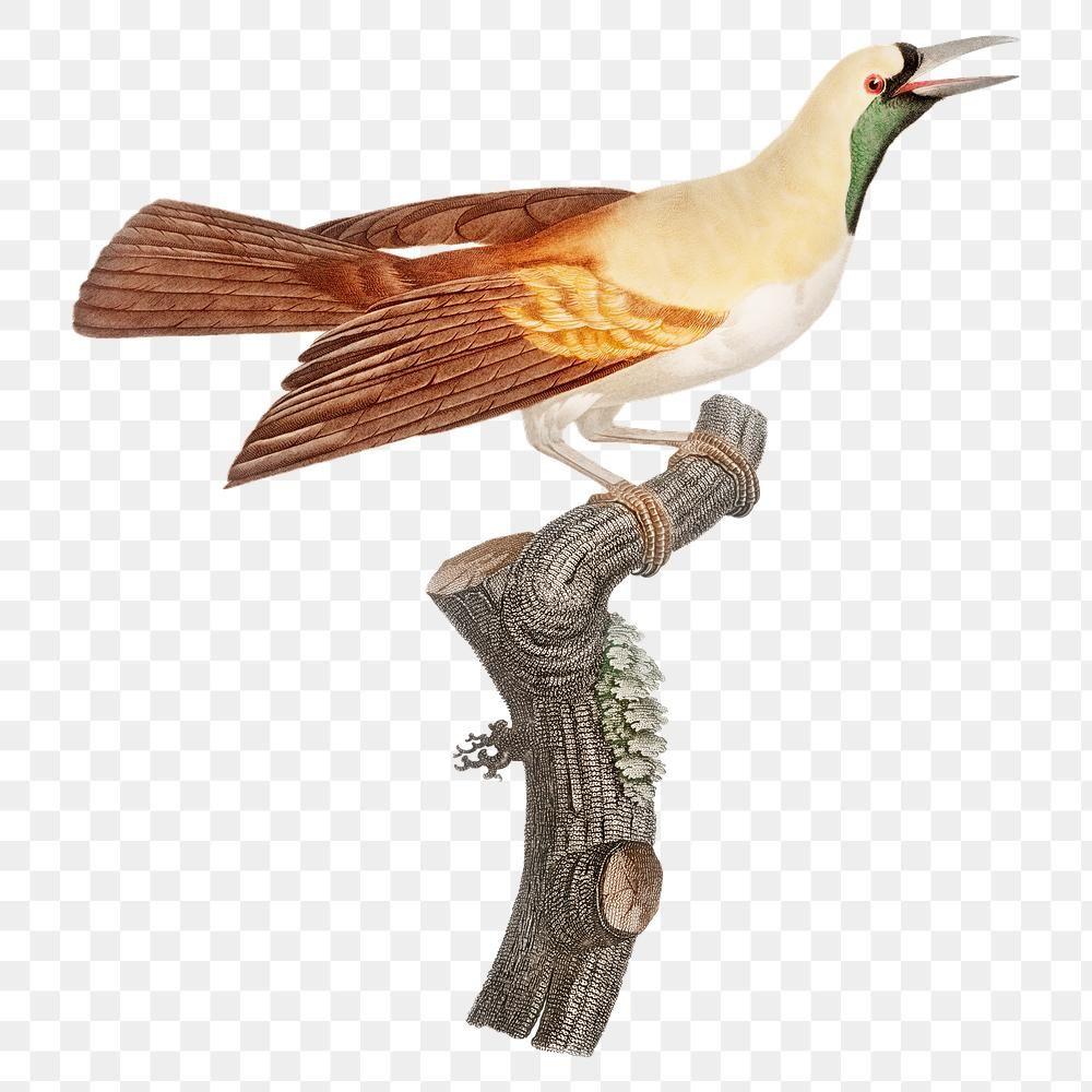 Emperor Bird Of Paradise Png Vintage Drawing Illustration Premium Image By Rawpixel Com Namcha Vintage Drawing Bird Illustration Bird