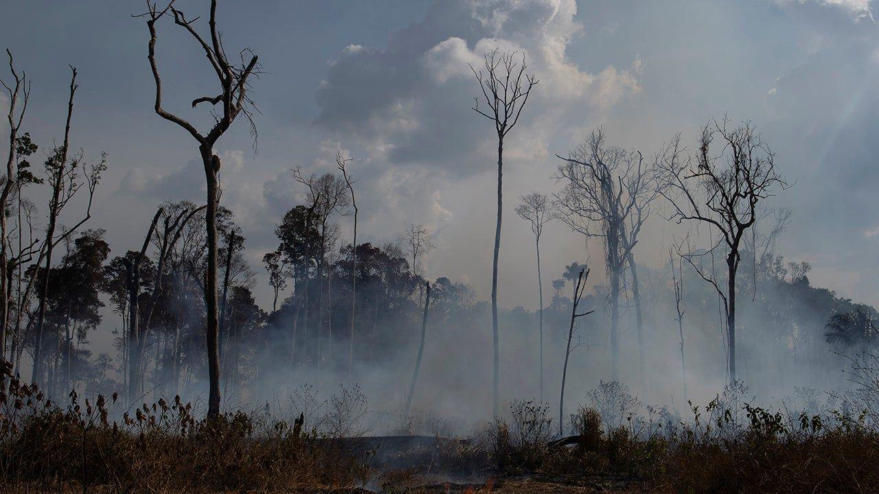 Amazon Rainforest Fires Releasing Plumes Of Carbon Monoxide