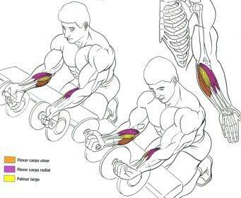 Curl De Antebrazos Con Mancuernas Agarre En Supinación Dumbbell Workout Exercise Fitness