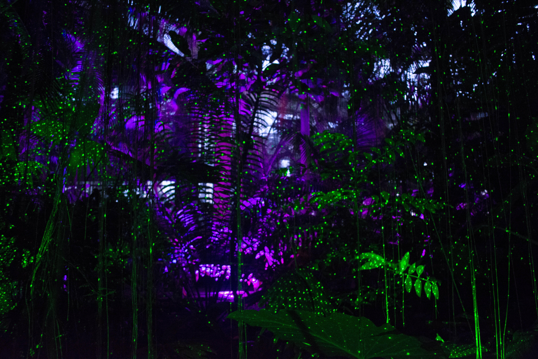 atlanta botanical garden rain forest atrium