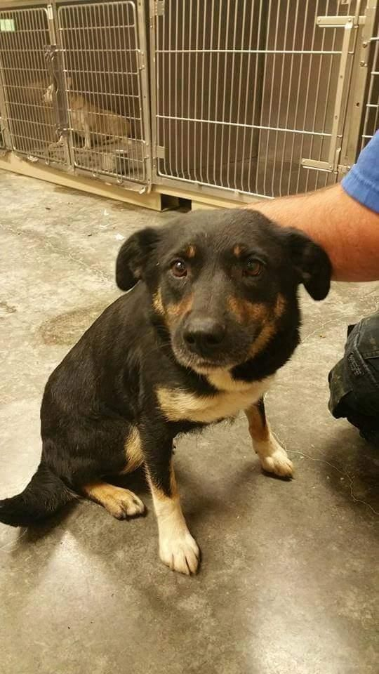 Adopt Lola On Small Dog Rescue Pet Search Dogs