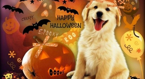 Cute Halloween Desktop Wallpaper Halloween Wallpaper Halloween Desktop Wallpaper Halloween Puppy