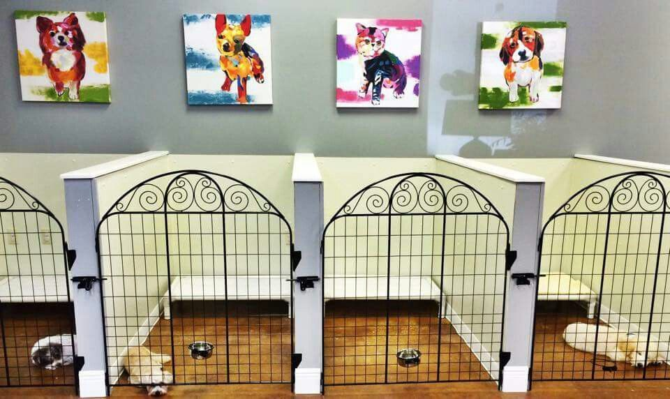 Pin By Amy Radez On Store Ideas Dog Boarding Facility Dog Hotel