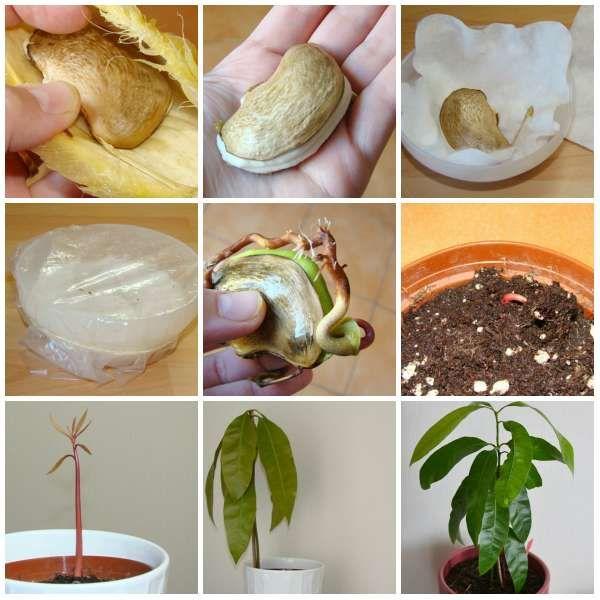 16 Fruits Et Legumes A Faire Pousser A Partir De Leurs Restes