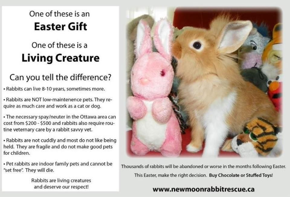 Please Keep This In Mind At Easter Always Purchase Pets Responsibly With Images Rabbit Rabbit Care