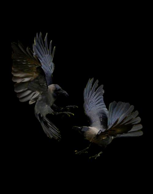 Pin von Jinx Alex auf Ravens | Pinterest