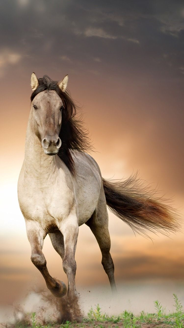 Beauty On The Fire Photo Horse Background Background Images Hd Studio Background Images