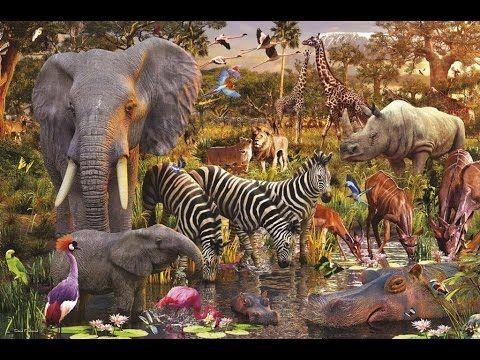 Las Cosas Más Increibles del Mundo Animal
