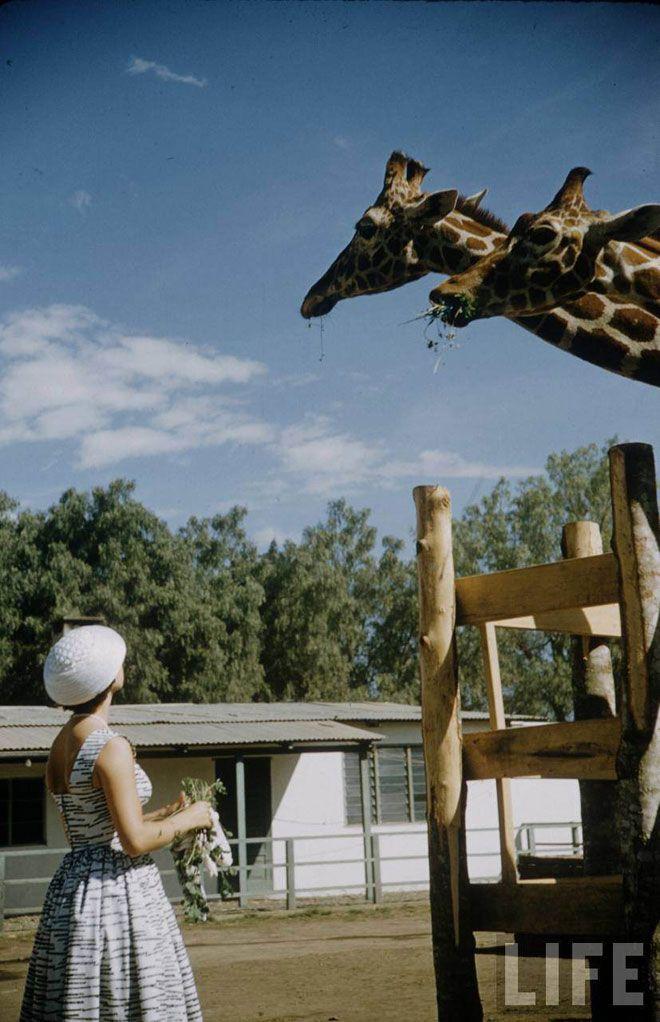 Princess Margaret, Giraffe.