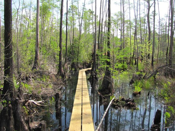Okefenokee Swamp Park Okefenokee Swamp Park-...