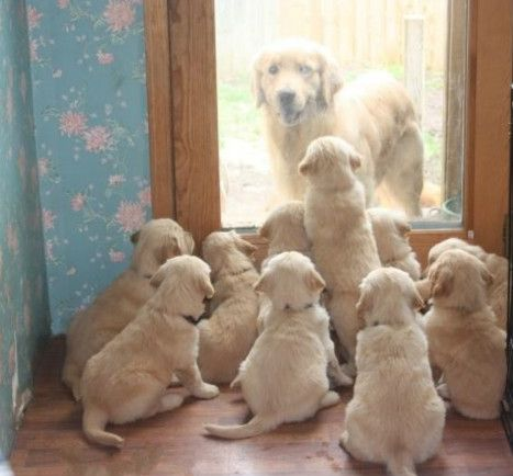 Puppies Locked Mom Out…..to cute
