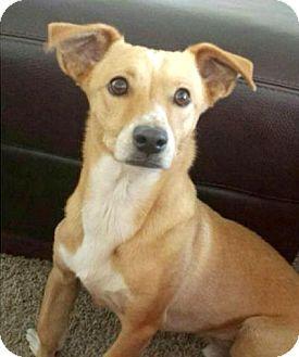 San Diego, CA Greyhound Mix. Meet Shiloh a