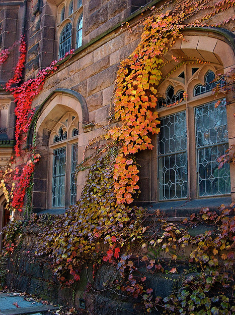 Autumn ivy, windows Princeton Township, New Jersey USA