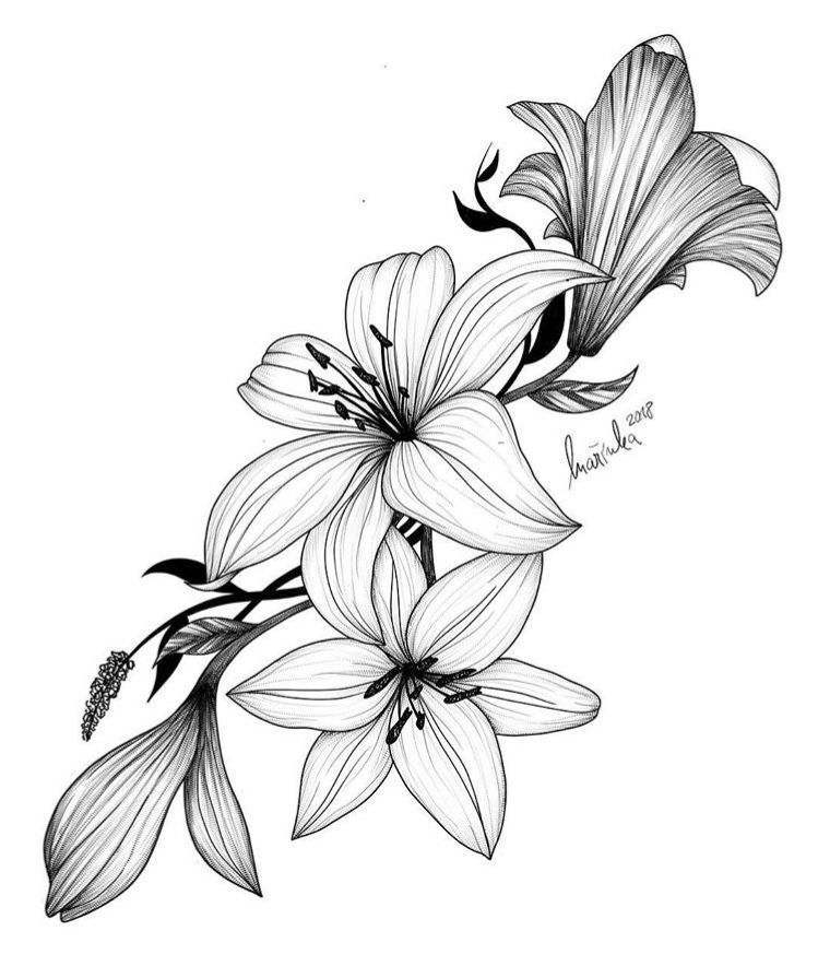 Pin by Janice Hobbs on Tattoos | Easy flower drawings ...