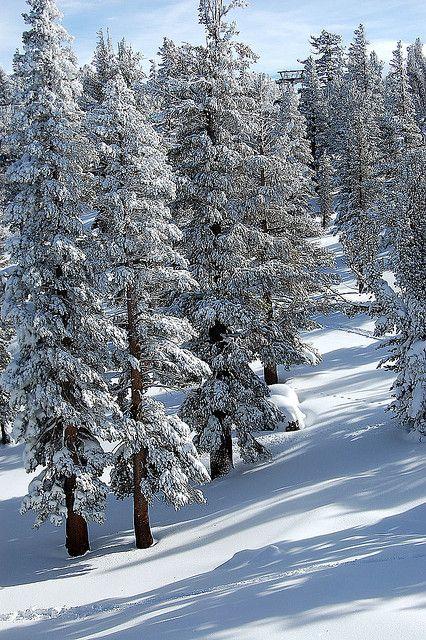 Lake Tahoe Winter Wallpaper Desktop Background: 78 Best Ideas About Lake Tahoe Winter On Pinterest