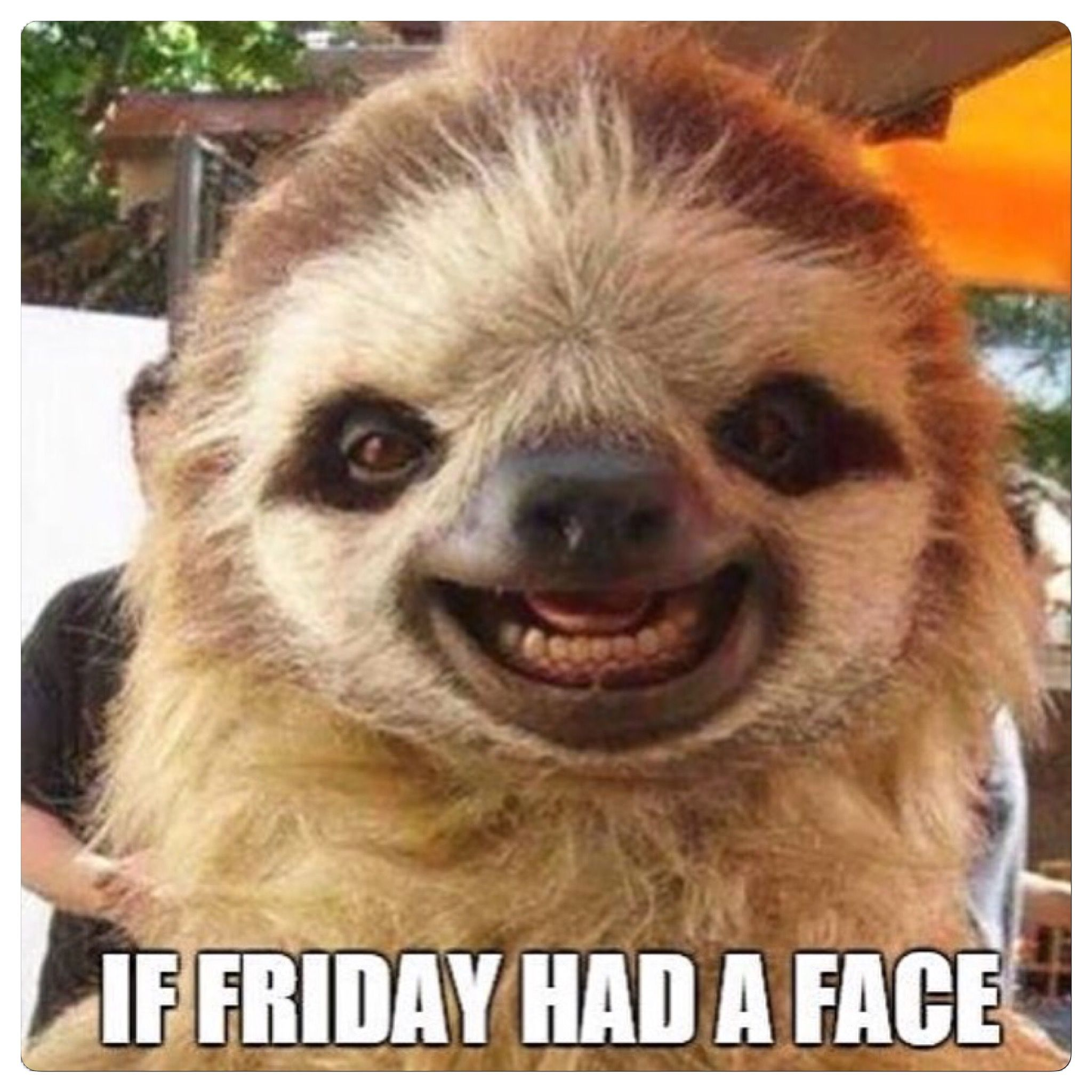 pin by sandra nilsen on happy friday funny animal memes