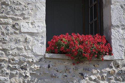 French window with red flowers.