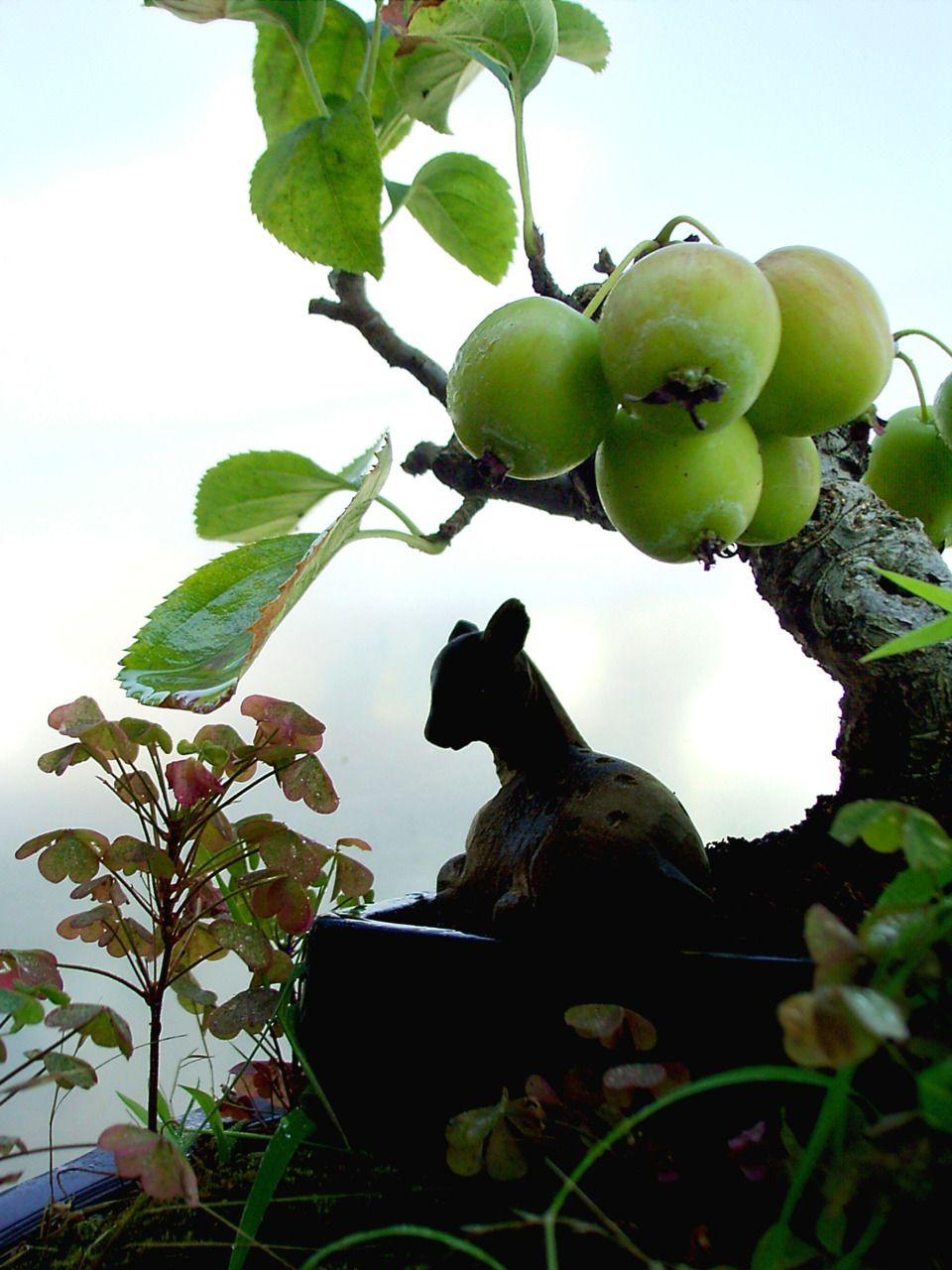 Petit bonsai amazing bonsai trees pinterest bonsai ikebana