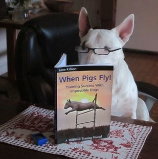 Picture Dogs English Bull Terriers Animals