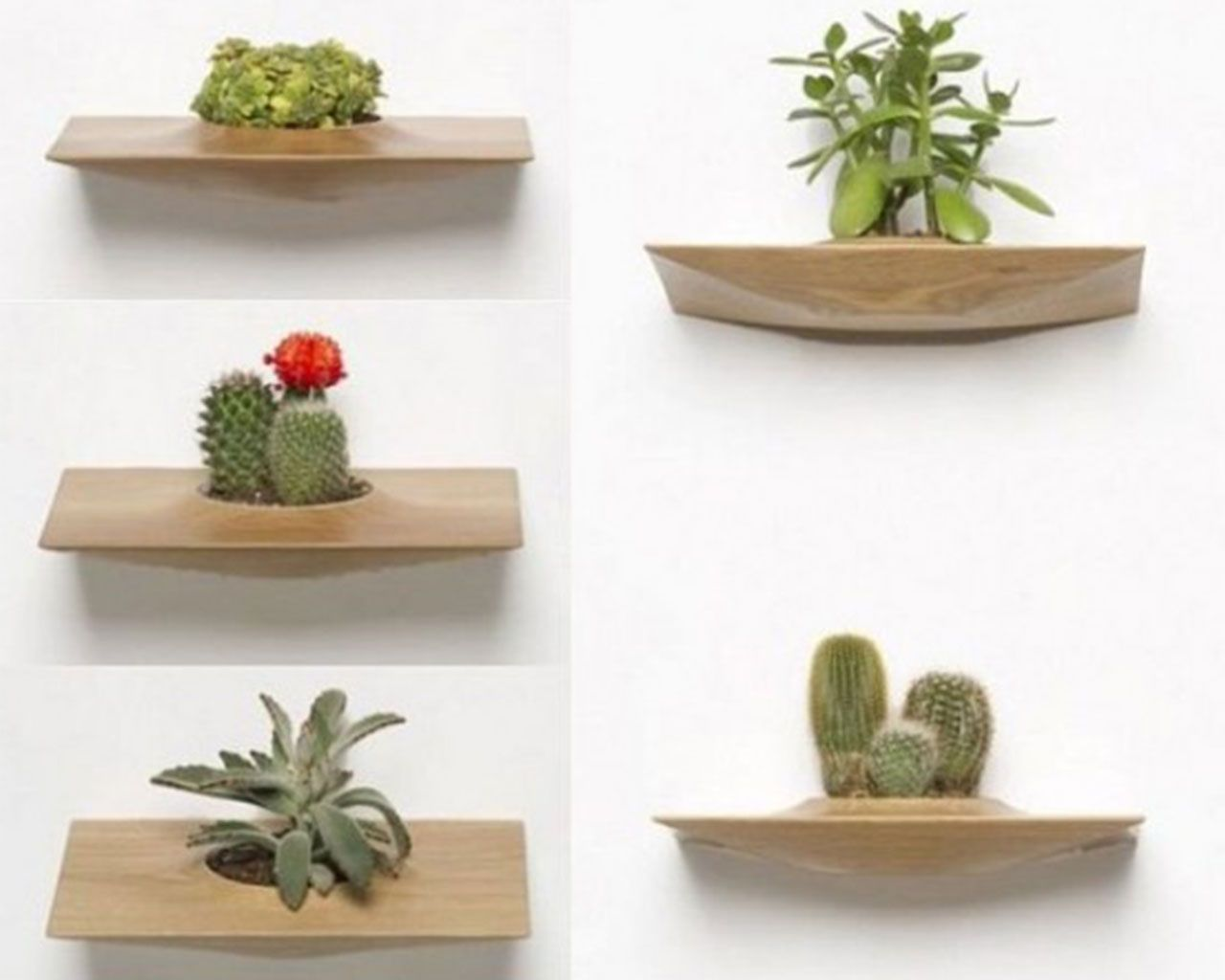 Wooden plant pots ideas for placing on the walls for Wooden cactus planter