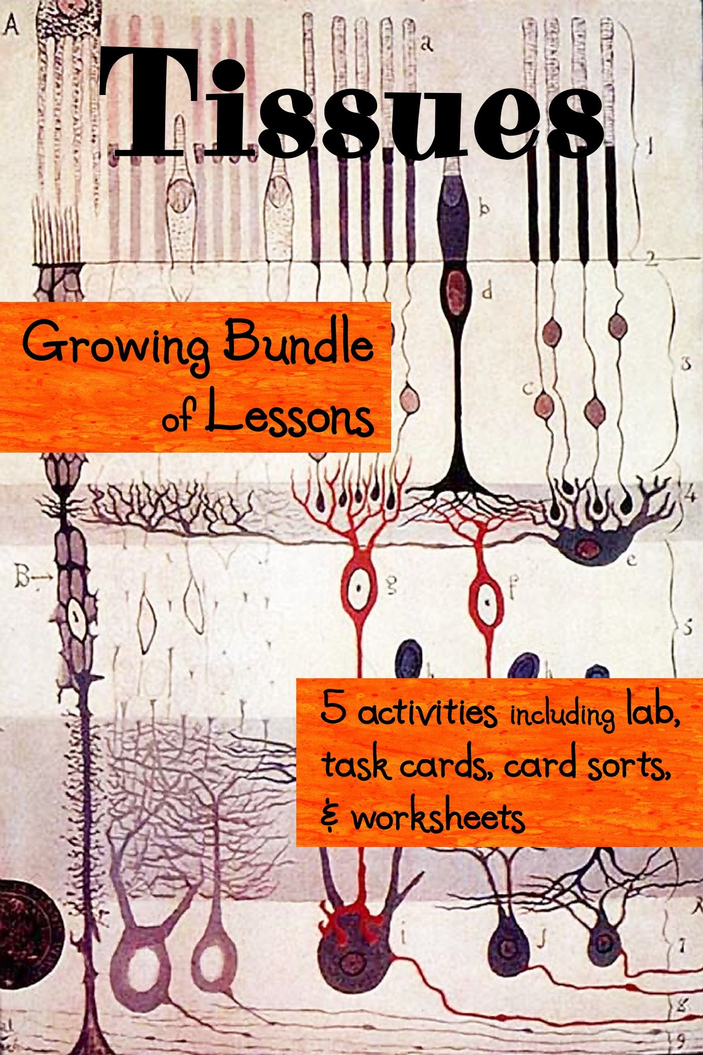Tissue Activities Including Task Cards Interactive Cards Lab And More Tissue Types Free Science Worksheets Task Cards