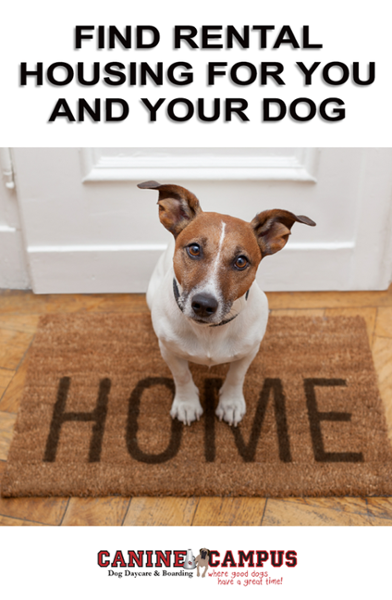 Find Rental Housing for You and Your Dog Dog daycare
