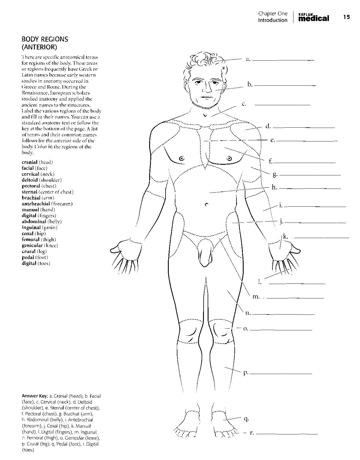 Kaplan Antomy Coloring Book Anatomy Coloring Book Adult