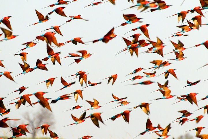 Näyttävä lintuparvi