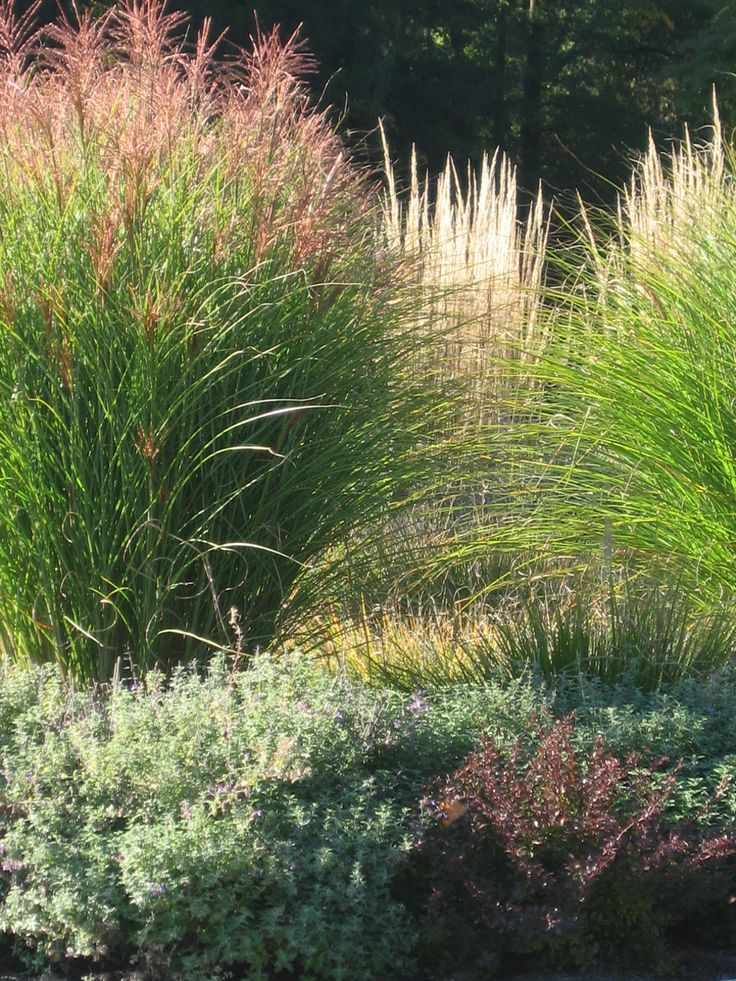 Grasses add so much movement and texture to the landscape ...