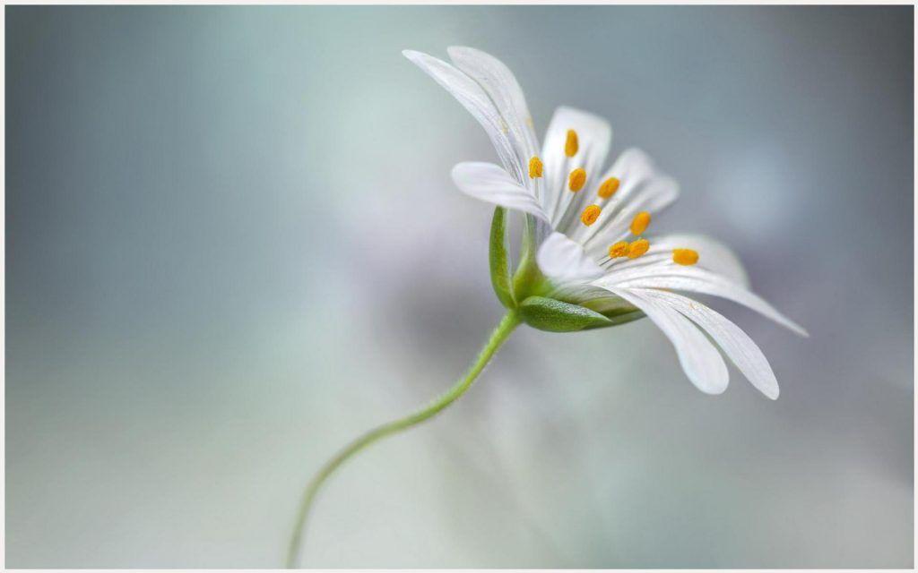 single flower beauty hd wallpaper single flower beauty