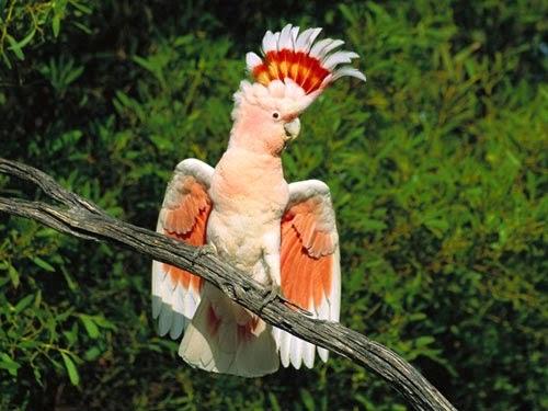 اجمل الطيور بالصور الأكثر إثارة للإعجاب في العالم Animals Parrot Bird