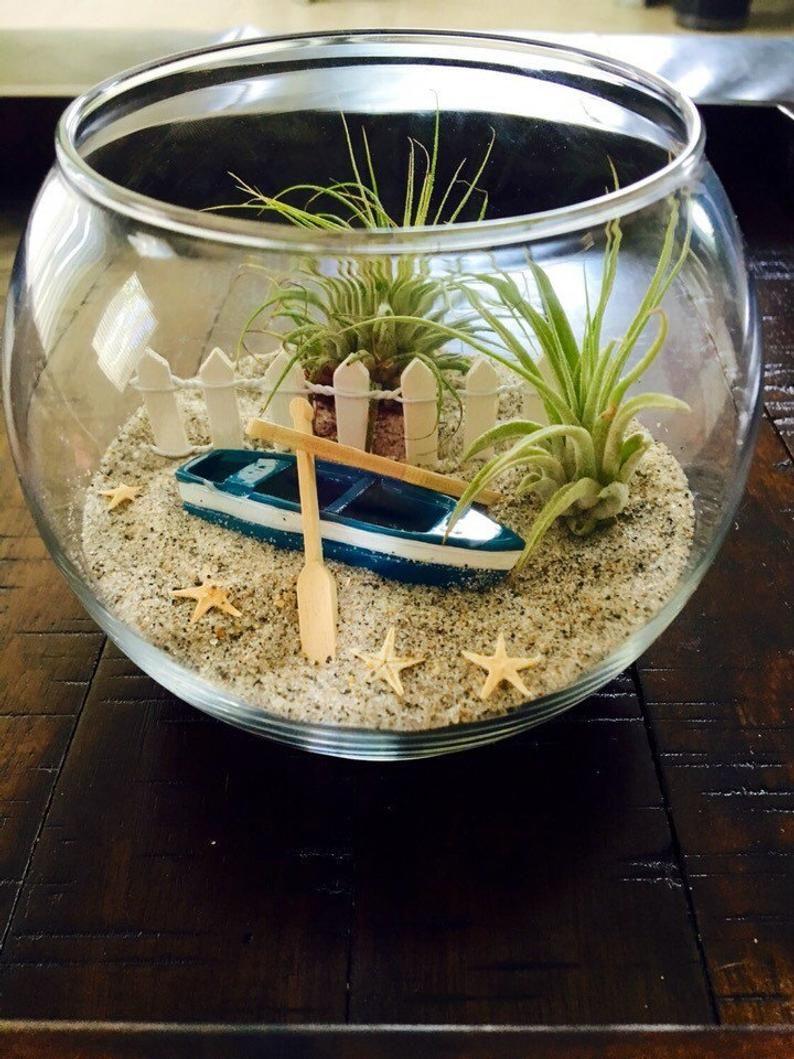Air plant terrarium beach terrarium glass terrarium diy