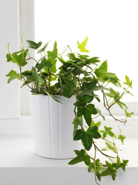 Las 20 Plantas De Interior Mas Resistentes Indorplants Pinterest - Plantas-de-interior-resistentes