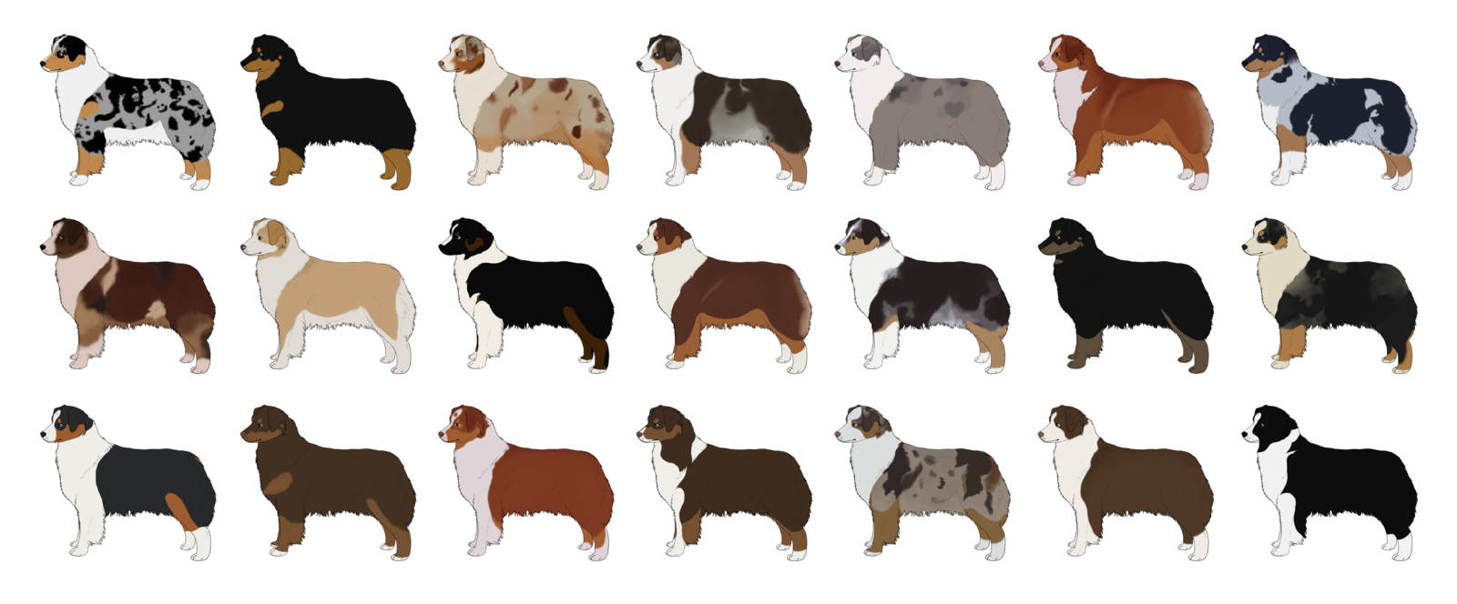 Lots Of Australian Shepherd Cartoon Dogs Australian Shepherd