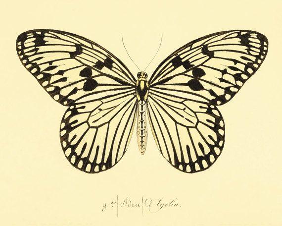 Vintage Butterfly print Garden art print Cottage art Victorian print ...