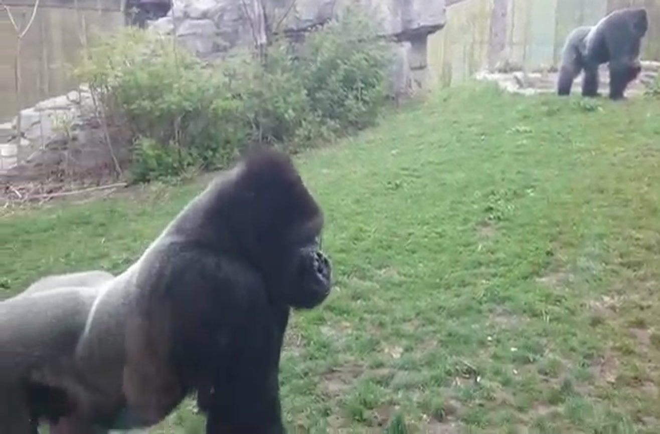 Pin on Knee Slappers