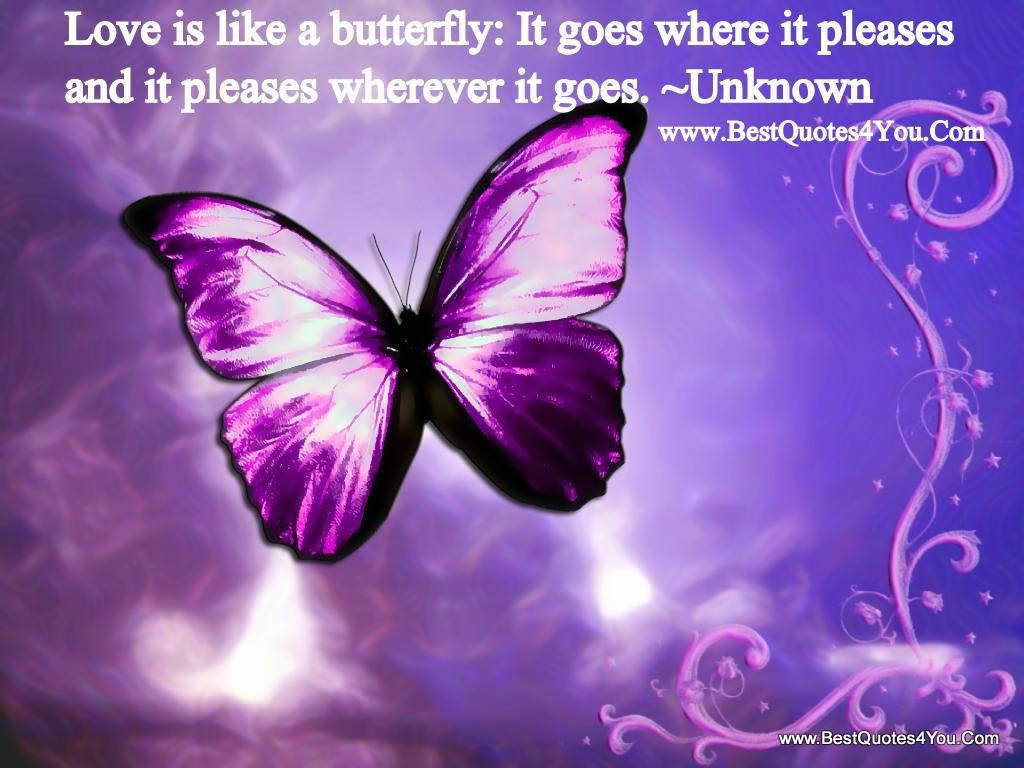 Great Life Quotes Pursuit Of Happiness And Love Butterfly Wallpaper Purple Butterfly Colorful Butterflies