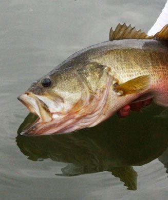 Summer bass fishing tips fishing pinterest bass for Bass fishing tips