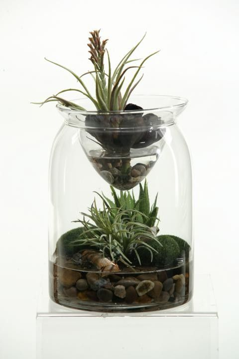 Mini aloe, easter grass and tillandsia in glass jar with glass insert - Terrariums - Greenery