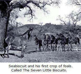 Seabiscuit The Seven Little Biscuits Horses Beautiful Horses Horse Racing