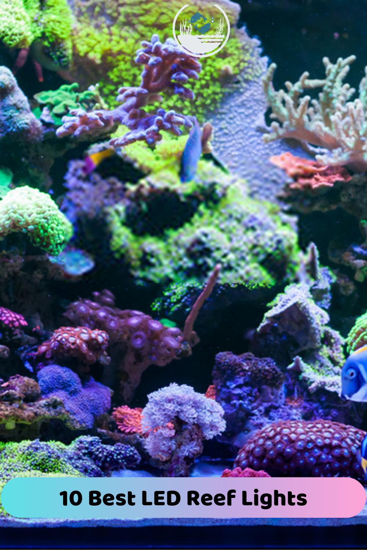 10 Best Reef Led Lights Reviews Side By Side Comparison Fish Tank Plants Planted Aquarium Reef Lighting