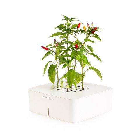 Click Grow Chili Pepper Http Wishareit Com 400 x 300