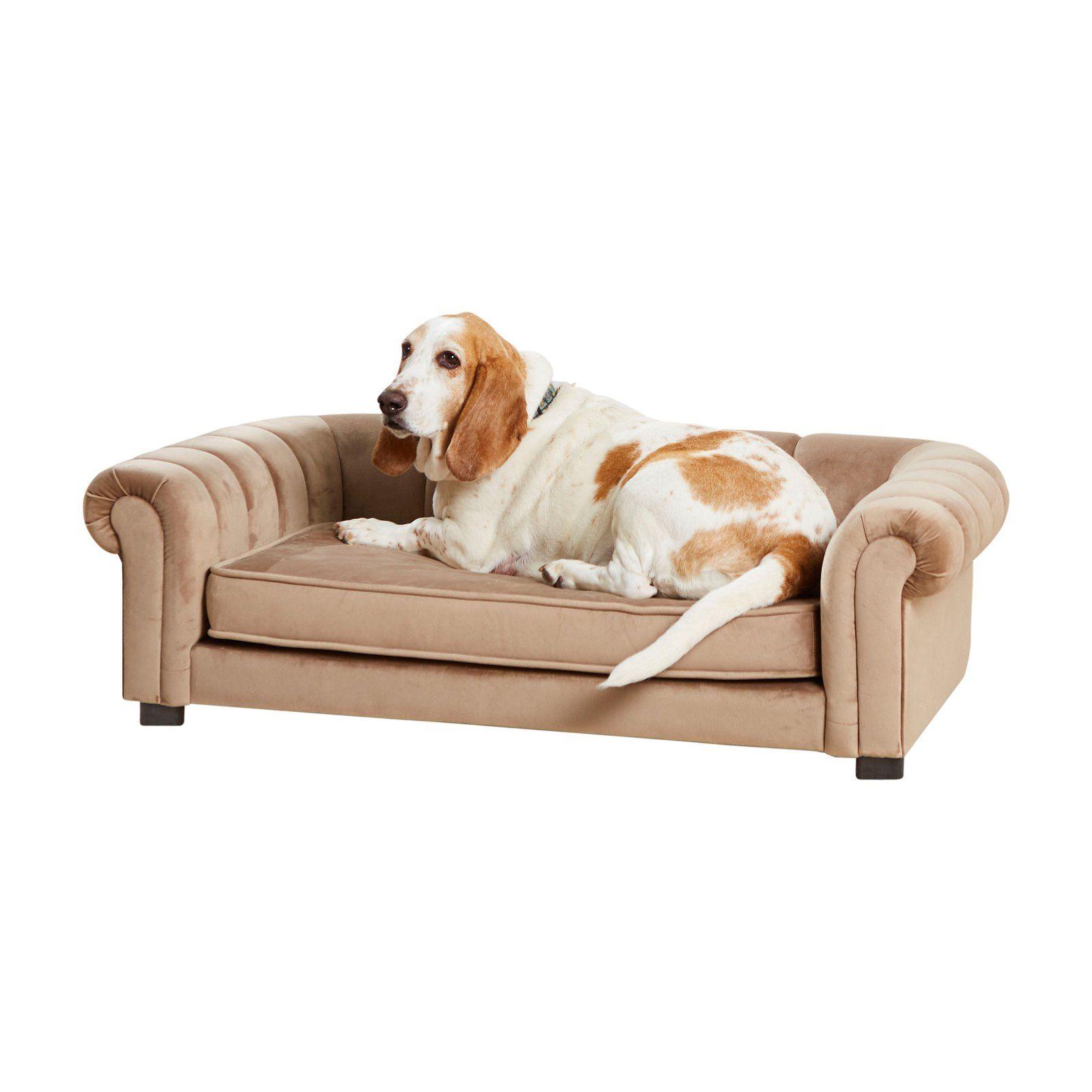 Enchanted Home Pet Sullivan Pet Sofa Pet beds, Pets, Bed