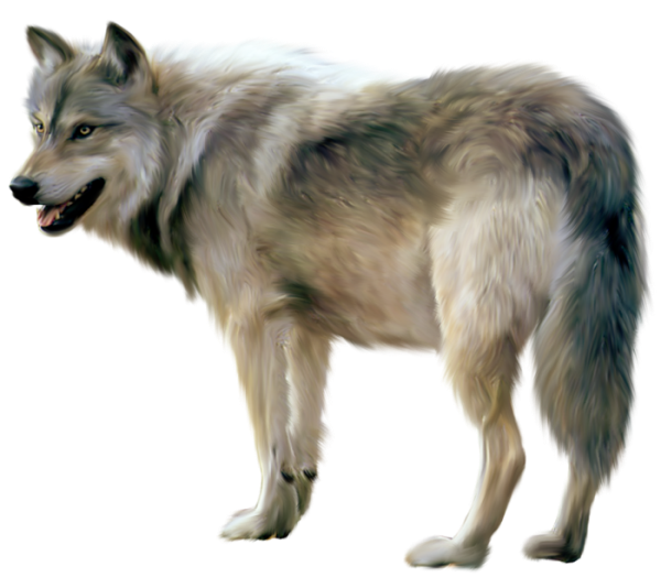 Loup png images | PNGEgg
