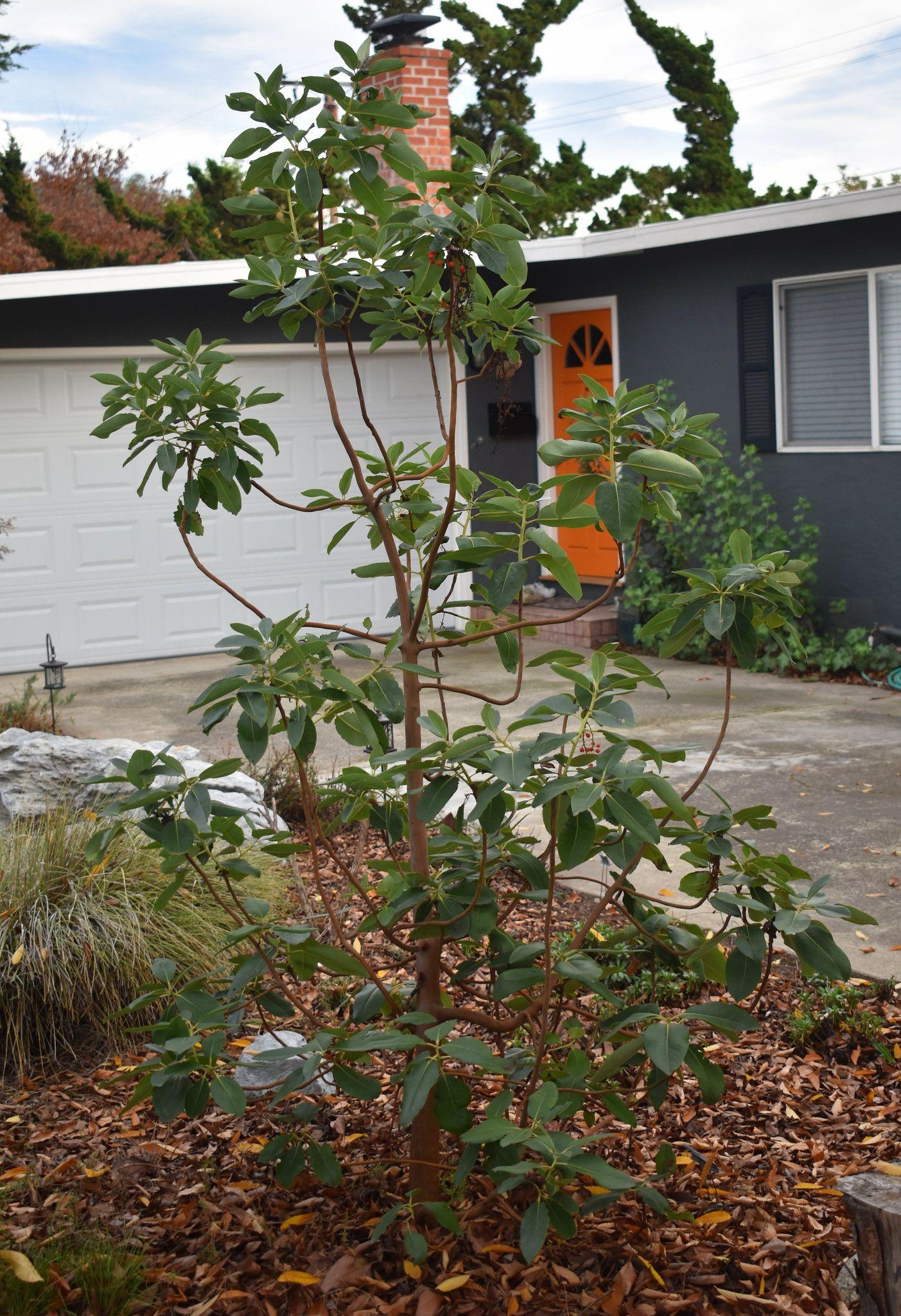 DSC_0014 | California native garden, Native gardens and Gardens