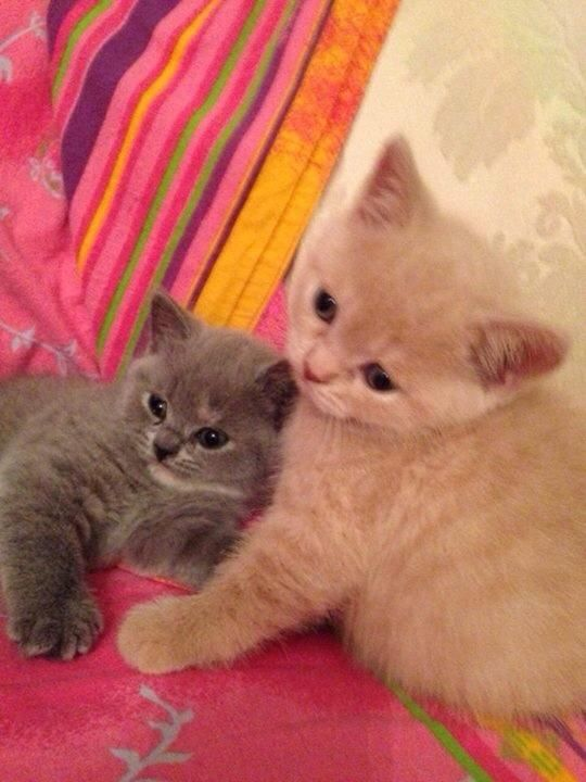 A couple of cuddly kittens